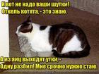 https://lolkot.ru/2019/10/05/ornitolog-eksperimentator/