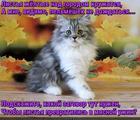 https://lolkot.ru/2016/10/22/osenniye-pelmeni/