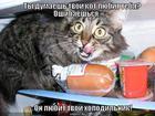 https://lolkot.ru/2013/02/11/oshibochka/