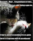https://lolkot.ru/2015/10/31/osnovnoy-instinkt-4/