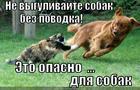 https://lolkot.ru/2014/09/09/ostorozhno-koshka-bez-povodka/