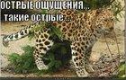 https://lolkot.ru/2011/08/05/ostryye-oschuscheniya/