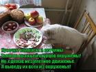 https://lolkot.ru/2014/04/03/osvoboditel/