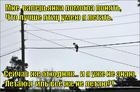 https://lolkot.ru/2015/01/02/otchego-koshki-ne-letayut-kak-ptitsy/