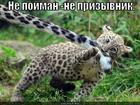 https://lolkot.ru/2012/11/17/otkosil/