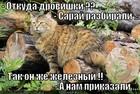 https://lolkot.ru/2012/04/12/otkuda-drovishki/