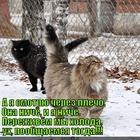 https://lolkot.ru/2015/01/16/otsenil-ponravilas-dobavil-v-spisok/