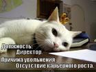 https://lolkot.ru/2012/07/10/otsutstviye-karernogo-rosta/
