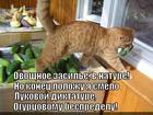 https://lolkot.ru/2014/10/31/ovoschnoy-avtoritet/