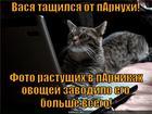 https://lolkot.ru/2014/01/04/parnikovyy-effekt/