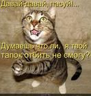 https://lolkot.ru/2010/07/08/pasuy/