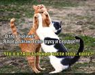 https://lolkot.ru/2014/08/06/pechen-vodke-zheludok-seledke/