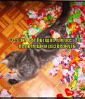 https://lolkot.ru/2014/06/23/pelmeshki-bez-speshki/