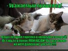 https://lolkot.ru/2014/01/30/pereputal-parkovki/
