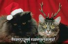 https://lolkot.ru/2010/04/08/perestan-kurit/