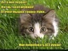 https://lolkot.ru/2019/06/13/pervoye-leto/
