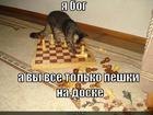 https://lolkot.ru/2011/10/30/peshki-na-doske/