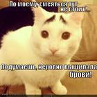 https://lolkot.ru/2014/01/22/pidrovnyayem/