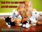 https://lolkot.ru/2014/12/10/plyushevyye-durilki/