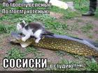 https://lolkot.ru/2013/01/27/po-tvoyemu-velenyu-po-moyemu-hotenyu/