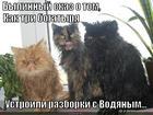 https://lolkot.ru/2014/12/16/pobeda-vodyanogo-1-0/