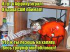 https://lolkot.ru/2016/10/25/pobeditel-noskov/