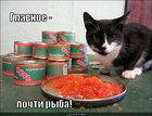https://lolkot.ru/2012/07/16/pochti-ryba/