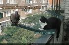 https://lolkot.ru/2010/05/20/pochtovyy-golub/