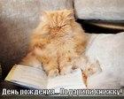 https://lolkot.ru/2012/02/28/podarili-knizhku/