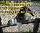 https://lolkot.ru/2014/12/19/podkotovka-k-brosku/
