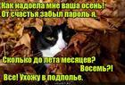 https://lolkot.ru/2018/10/16/podpolnaya-pora/