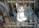 https://lolkot.ru/2013/12/26/podrostkovyy-vozrast/