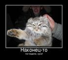 https://lolkot.ru/2011/09/23/pogladili/