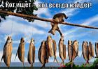 https://lolkot.ru/2014/01/02/poiskovik-s-hvostikom/