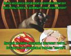 https://lolkot.ru/2014/08/15/poka-nikto-ne-zametil/