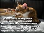 https://lolkot.ru/2019/02/15/pokayannaya-grustinka/