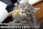 https://lolkot.ru/2012/05/29/pokormi-kota-2/