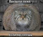 https://lolkot.ru/2010/07/26/pokormi-menya/