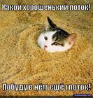 https://lolkot.ru/2013/11/14/polon-schastya/