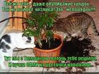 https://lolkot.ru/2014/07/19/pomoschnichki-kuchkovayateli/