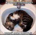 https://lolkot.ru/2011/07/09/pomoy-menya-bleat/