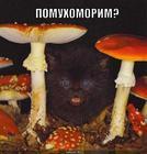 https://lolkot.ru/2010/02/03/pomuhomorim/