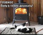https://lolkot.ru/2014/01/20/popogrey-obyknovennyy/