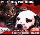https://lolkot.ru/2011/03/30/poprobuyem-otstirat/