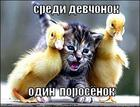 https://lolkot.ru/2010/10/23/porosyonok/