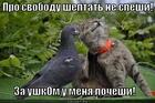 https://lolkot.ru/2014/11/05/posat-yazyk-ne-speshi-ty-sperva-kotuhu-pocheshi/