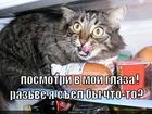 https://lolkot.ru/2010/09/15/posmotri-glaza/