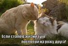 https://lolkot.ru/2011/12/14/posmotri-na-rozhu-druga/