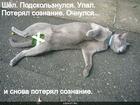 https://lolkot.ru/2012/01/10/poteryal-soznaniye/