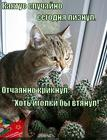 https://lolkot.ru/2014/12/07/potyanulo-na-ostrenkoye/